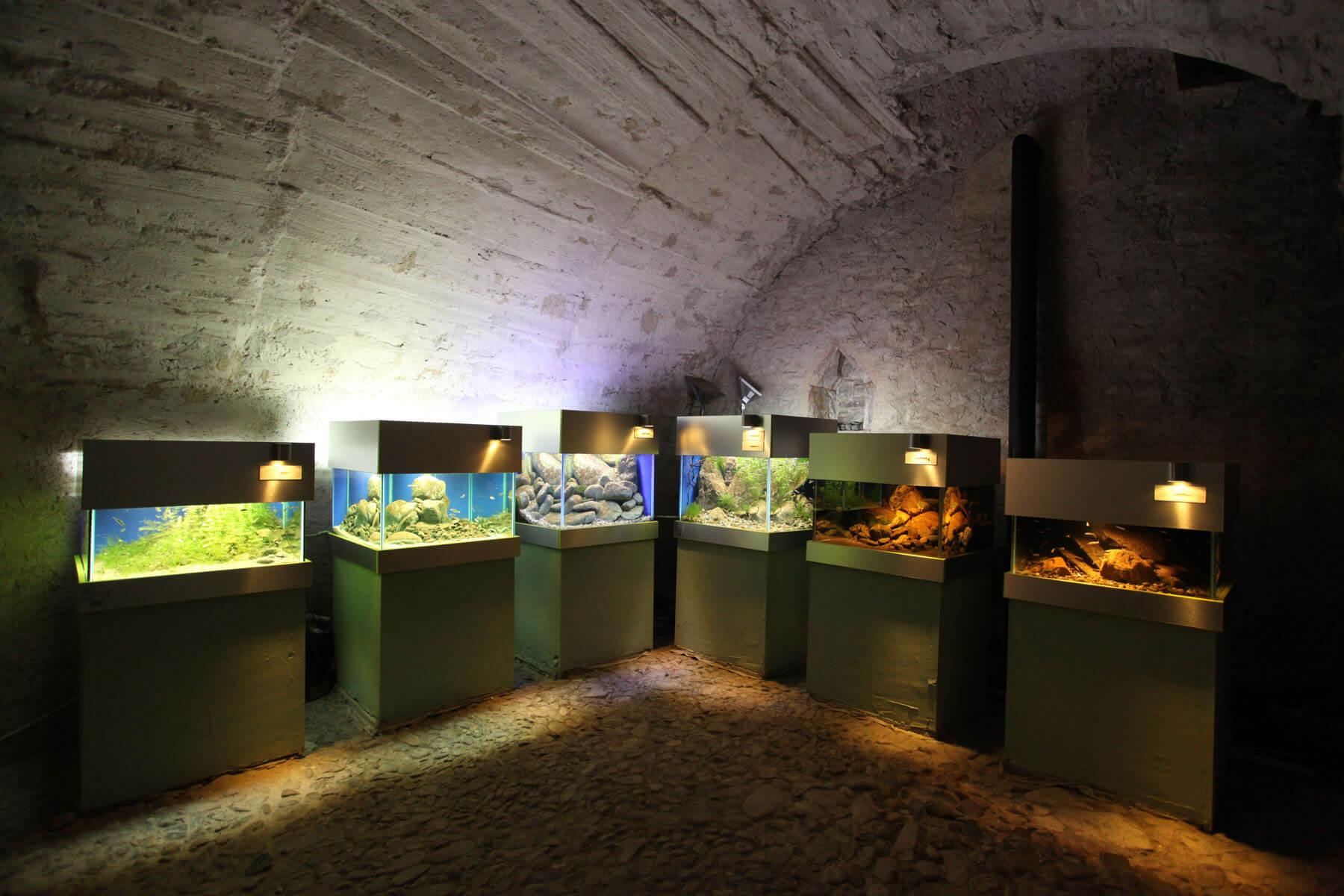 Akvárium Pod hladinou Vltavy foto